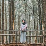 Keindahan Wisata Hutan Pinus yang Tak Bisa Dilupakan